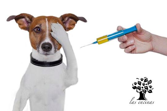 Vacuna a tu perro en iVet Centro Veterinario Las Encinas