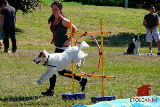 Enséñale buenos modales a tu perro de forma divertida con este pack mensual de 6 clases de adiestramiento canino en el centro Etolcanin: Detección, agility...