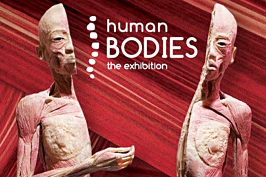 La impresionante exposición 'Human Bodies, The Exhibition' se instala en Baluarte ¡Un apasionante viaje a través del interior del cuerpo humano!