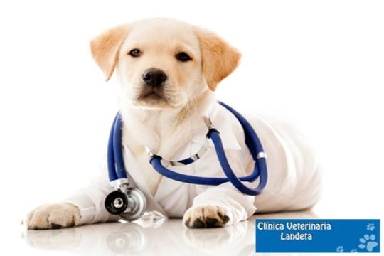 Examen clínico + corte de uñas + limpieza de oídos + vaciado glándulas + vacuna en la clínica Landeta de Getxo ¡Todo lo que tu mascota necesita!