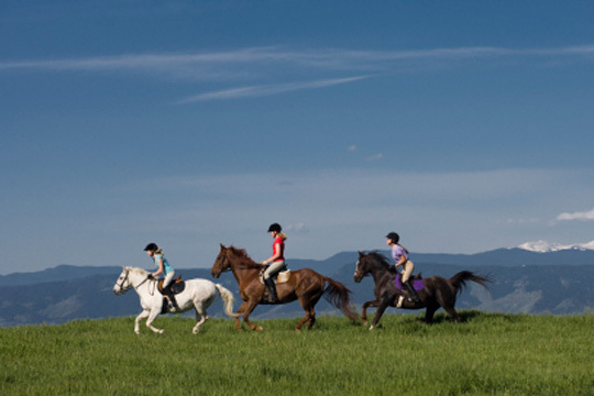 Disfruta del paisaje y la naturaleza con un paseo a caballo con Lauhazka en el Club Hípico de Barrika  ¡De 1 a 4 horas!