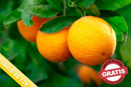 Comienza el día con un zumo de auténticas naranjas Navelane o disfrútalas en el postre ¡10, 15 o 20kg con gastos de envío incluidos!