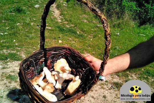 Descubre el mundo de los hongos y las setas acompañado por un guía micológico profesional ¡Ruta de 4 horas!