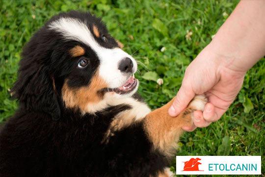 El objetivo de estas fiestas es que inicies una buena relación con tu cachorro, que empiece a socializarse y aprendas pautas para su adiestramiento y cuidado ¡Bienvenido a casa!
