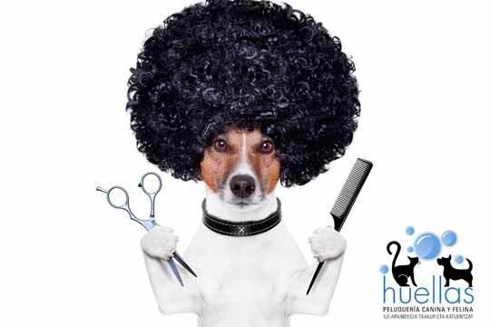 Tratamiento estético e higiénico para tu perro con o sin corte de pelo en Huellas ¡Mima a tu amigo más fiel!