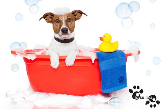 Cuida a tus mascotas y mejora su imagen con un baño con opción a corte de pelo y uñas en el nuevo Luz de Luna ¡Para perros y gatos!