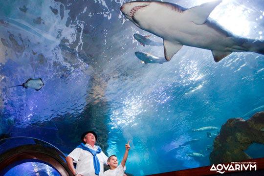 No te pierdas las maravillas del mar que se exhiben en el Aquarium de Donostia ¡Entrada de niño y adulto!