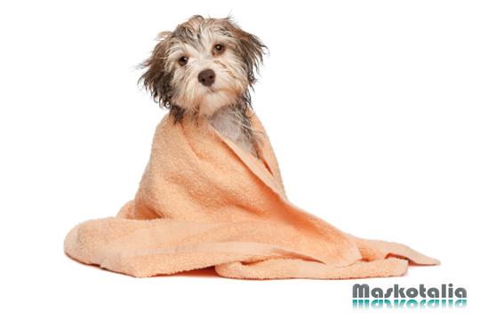 ¡Pon guapa a tu mascota! Lavado + Corte de pelo (opcional) + Cepillado + Limpieza de oídos + Corte de uñas + Desparasitación externa
