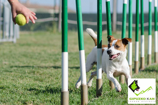 Enséñale buenos modales a tu perro de forma divertida con los profesionales de Gipuzko Kan