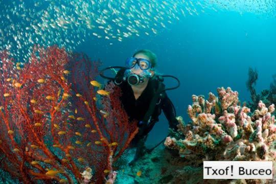 Disfruta del mar y aprende a sumergirte en las profundidades con un bautismo de Buceo en Bermeo con Txof!