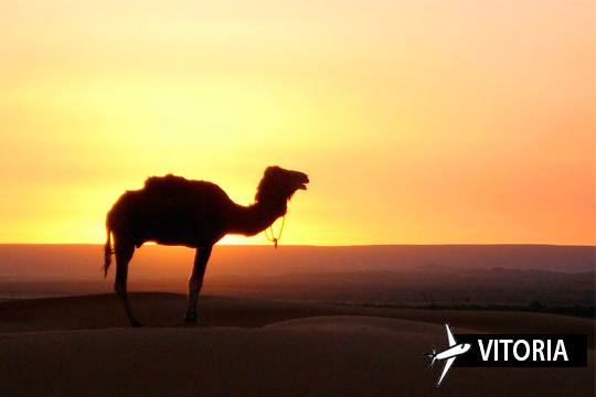 ¡Descubre el encanto de Marruecos con un viaje de 4 días a Marrakech! Te alojarás en un hotel 3* o 4* con desayunos o media pensión y tendrás incluida una visita panorámica a la ciudad
