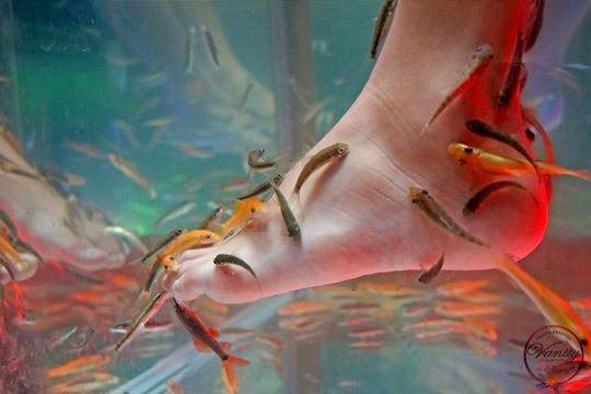 Pies bonitos y descansados gracias a este fantástico tratamiento que combina la ictioterapia con peces Garra Rufa, el masaje podal y una pedicura completa con aplicación de parafina