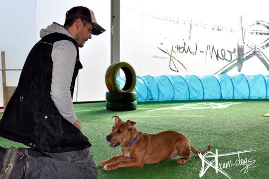 A lo largo de 8 clases en el centro Xtrem Dogs Corporation conseguirás una base de educación canina ¡Ideal para perros jóvenes, recién llegados o adoptados!