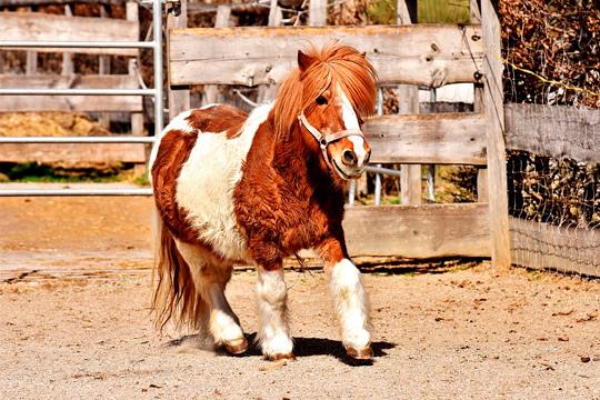 Disfruta de un paseo inolvidable en pony de la mano de Lar Zaldiak ¡Con amigos o con familia, de paseo por el monte!