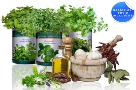 Colectivia 12 botes verdes con semillas de plantas for Plantas aromaticas para cocinar