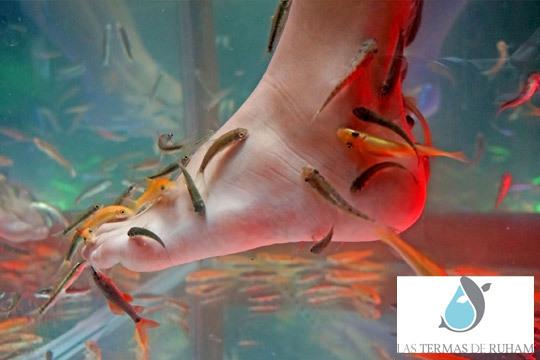 Presume de pies perfectos sin durezas y una piel suave con una sesión de limpieza podal + inmersión Fish Spa ¡Con peces Garra Rufa, el pequeño dermatólogo!