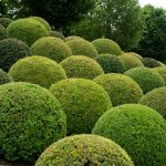 Clipped Buxus - Chateau Royal, Amboise, France