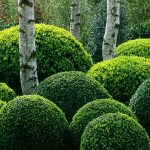 Buxus topiary hedging - Floriade 2002, Holland