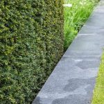 Taxus baccata hedge planted beside a granite pathway. Show Garden: The Telegraph Garden.