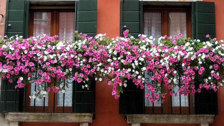 EVENTI – Balcone fiorito a Ripalimosani