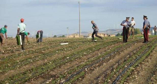 Caporalato e lavoro nero in agricoltura, approvata nuova legge. Tutte le novit