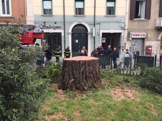 """Sequoia tagliata, Italia Nostra: """"Scomparso un segno identificativo della citt"""