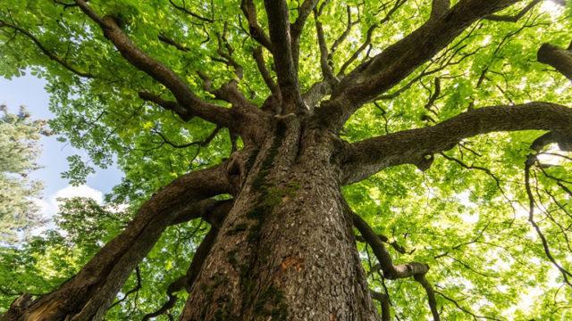 Legambiente a Gambatesa per la Festa dell'albero