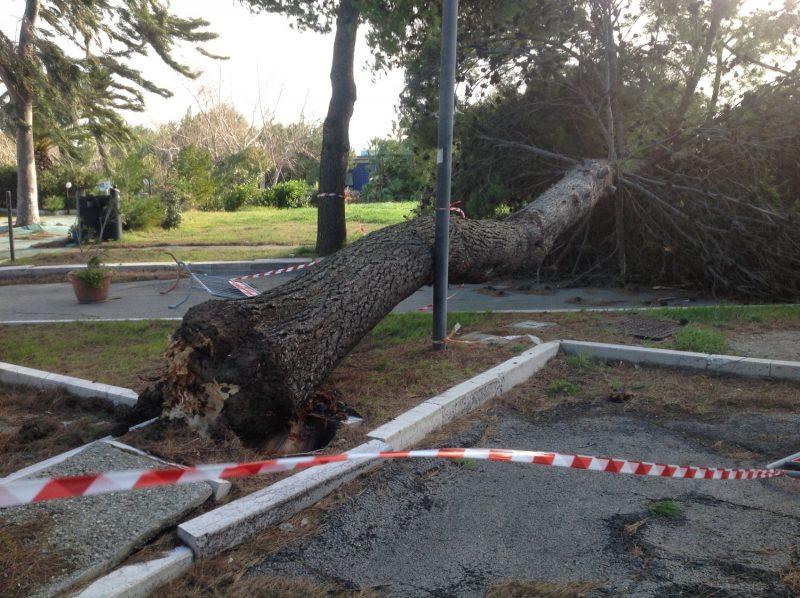 Niente neve sulla costa ma violente raffiche di vento, divelto un albero a Rio Vivo