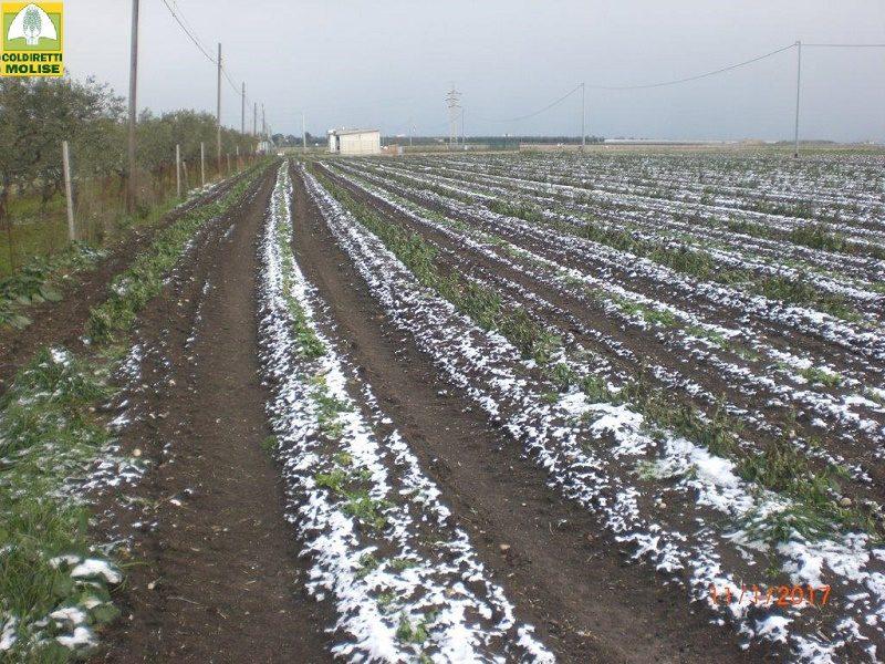Coldiretti Molise, prosegue il monitoraggio dei danni causati dalla neve