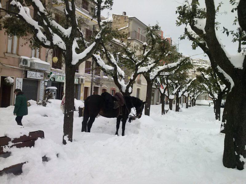 Trivento: pubblicato l'avviso per i danni da neve alle aziende agricole