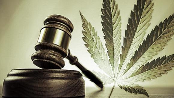 """Legalizzazione della """"cannabis"""", il disegno di legge italiano"""