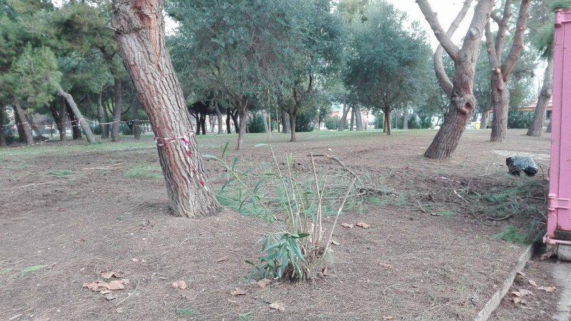 Operaio cade mentre pota albero