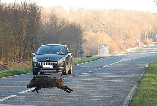 Danni da fauna selvatica, approvata la caccia di selezione
