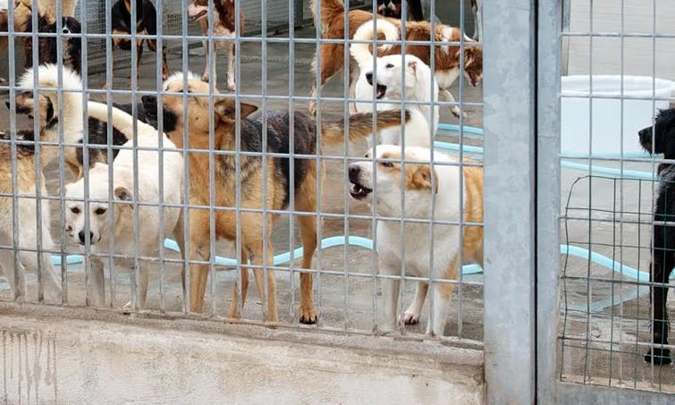 Venti cani costretti a vivere in 50 mq, sequestrato ricovero abusivo