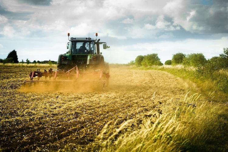 Consulenza aziendale in agricoltura, pubblicato il bando