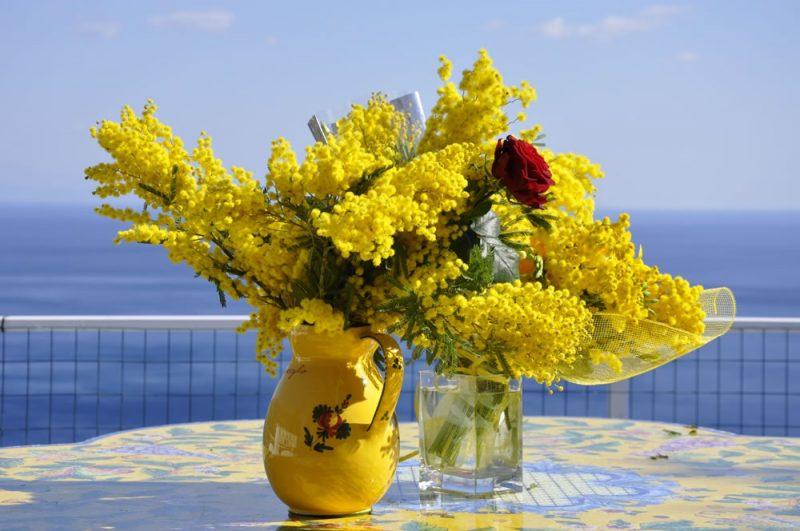 """Confcommercio Molise, 8 marzo: """"Acquistate mimose nei negozi dei fioristi"""""""