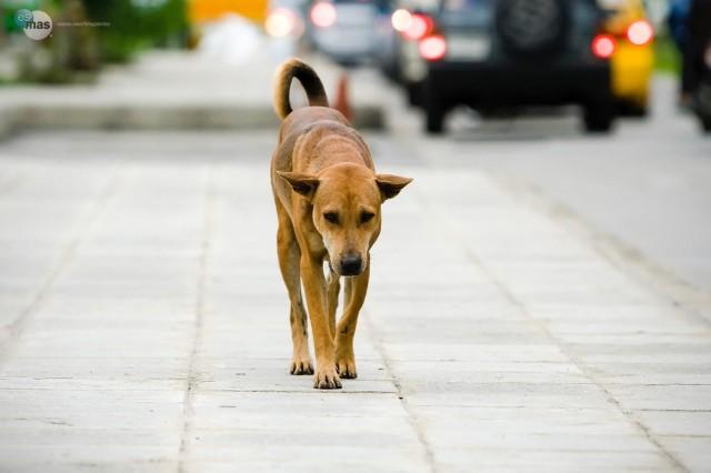 Cani avvelenati, allarme ad Agnone