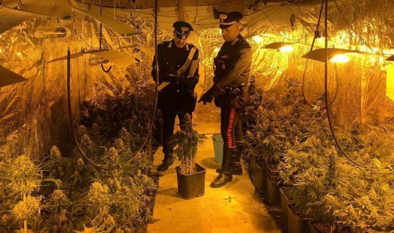 "Scoperto dai Carabinieri un ""vivaio"" di marijuana"
