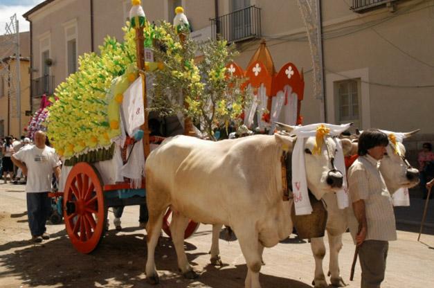 Urta il carro di San Pardo, giovane di Larino ferito a una gamba