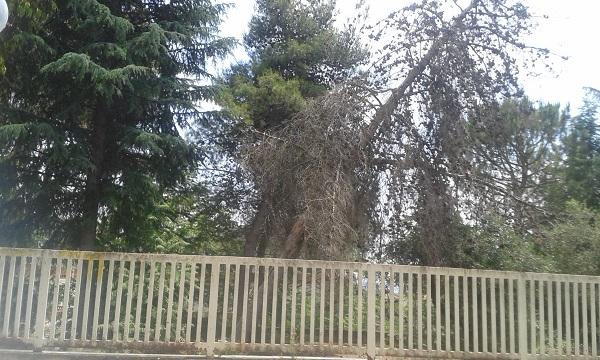 Venafro, scuola di via Maiella invasa dalla boscaglia