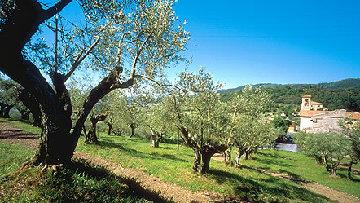 Aree rurali, liquidati 4 milioni di euro
