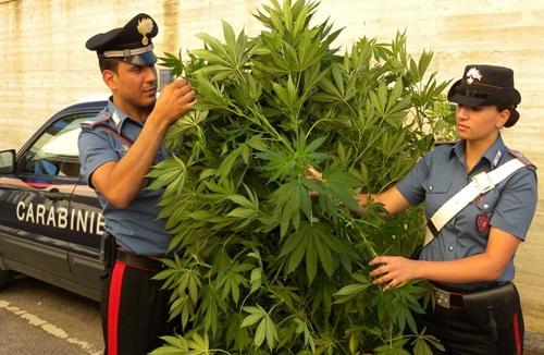 Piantagione di marijuana nel giardino di casa, 40enne nei guai