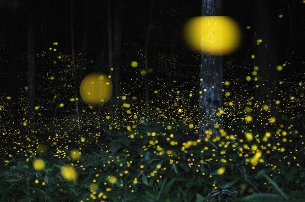 A Montedimezzo la terza edizione de 'La notte delle lucciole'