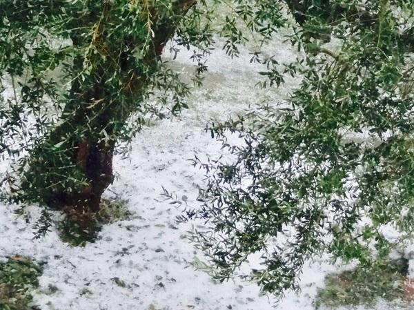 Danni da grandine in Basso Molise, al via le segnalazioni