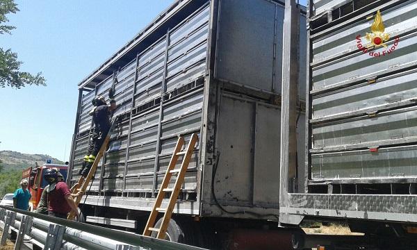 Tir in avaria sulla Trignina, Vigili del Fuoco salvano 5mila polli