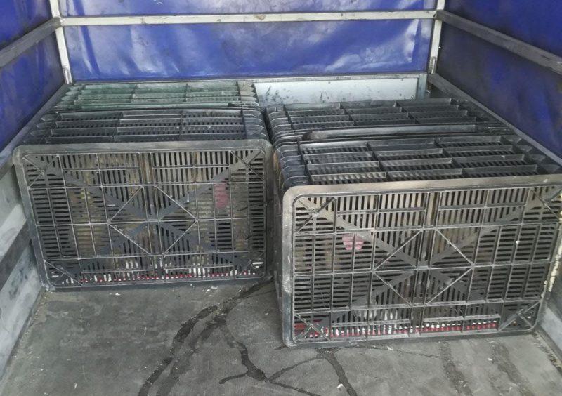 Maltrattamento di animali, la Stradale denuncia un rumeno