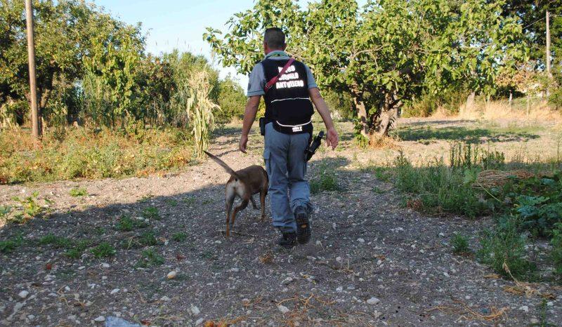 Nucleo cinofilo nei pressi del cimitero, in azione i cani antiveleno