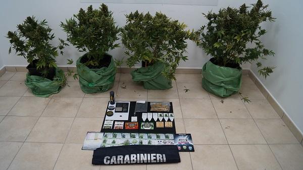 Piantagione di marijuana sul terrazzo, 40enne nei guai
