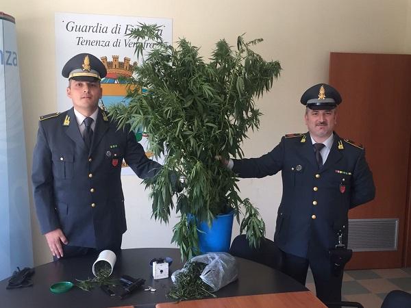 Sequestrata piantagione di cannabis, arrestato un 47enne
