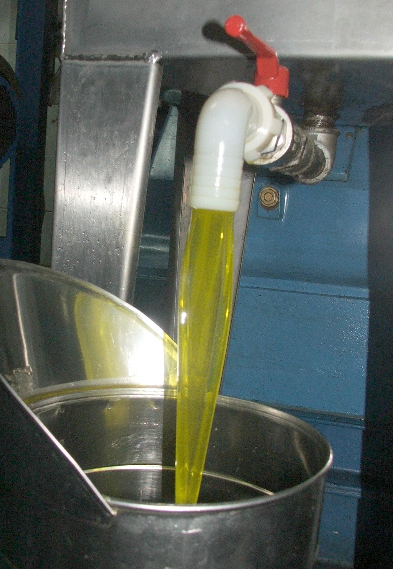 Olio d'oliva, nella Valle del Volturno una buona annata nonostante la siccità